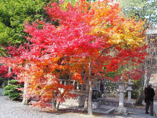 秋,紅葉,京都,もみじ,長岡京,光明寺