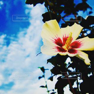 近くの花のアップの写真・画像素材[1384362]