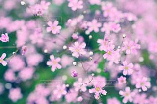 花,flowers,pink,small