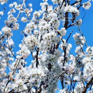 自然,桜,川津町
