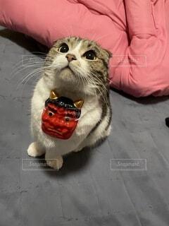 愛猫を鬼にしてみた👹の写真・画像素材[4118604]