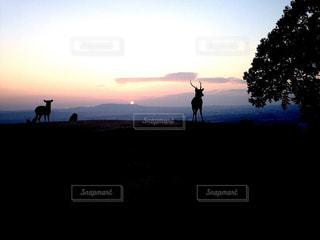 奈良公園の夕景と鹿の写真・画像素材[2876801]