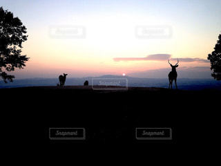 奈良の夕景と鹿の写真・画像素材[2876802]