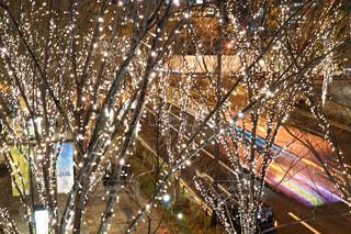 屋外,樹木,イルミネーション,ライトアップ,クリスマス,照明,装飾,明るい,グランフロント,クリスマス ツリー