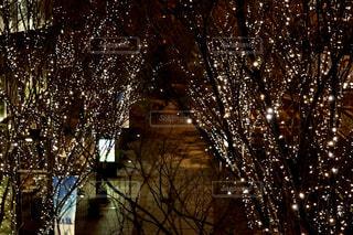 夜,屋外,樹木,イルミネーション,ライトアップ,クリスマス,照明,明るい,グランフロント,景観,クリスマス ツリー