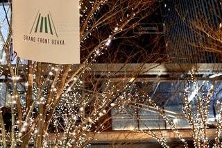 夜景,イルミネーション,ライトアップ,グランフロント,シャンパンゴールド,クリスマス ツリー