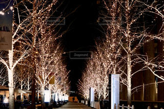 空,冬,屋外,樹木,イルミネーション,ライトアップ,クリスマス,並木,明るい,通り,景観,クリスマス ツリー