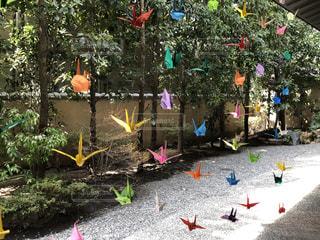 カラフルな折り鶴の写真・画像素材[3199674]