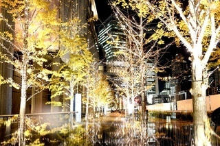 夜,屋外,黄色,樹木,イルミネーション,ライトアップ,クリスマス,並木,ロマンチック,明るい,通り,グランフロント