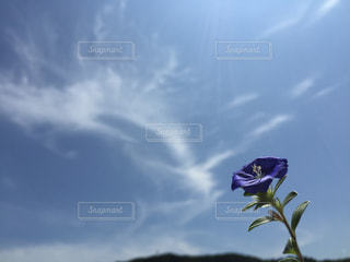 曇りの日に空気を通って飛んで人の写真・画像素材[1367595]