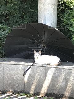 猫,夏,暑い,日差し,日影