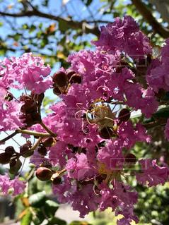 自然,花,屋外,ピンク,植物,晴れ,草木