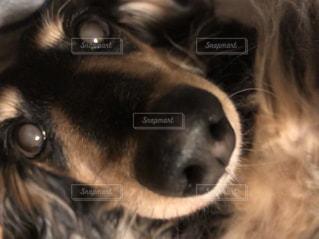 ひゃっ‼︎ となった瞬間、目がまん丸に…の写真・画像素材[1452692]
