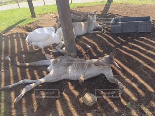 動物,カンガルー,夏バテ,熱中症,熱中症対策