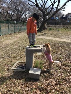 犬,公園,散歩,遊ぶ,男の子,保護犬,ミックス,犬と私