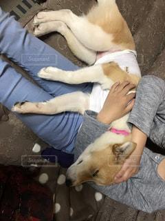 家族,犬,室内,昼寝,女の子,ペット,保護犬,ミックス