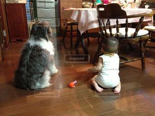 犬,リビング,後ろ姿,子供,背中