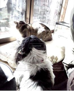 猫,動物,ペット,人物,無視,ネコ,熱い視線