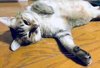猫,暑い,ねこ,癒し,フローリング,残暑,だらーん,気持ちいい,夏バテ,熱中症,ダラダラ,暑さ対策,冷たいフローリング