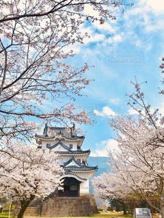 桜咲く宇和島城の写真・画像素材[1389633]