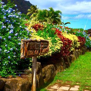 クアロアの花畑の写真・画像素材[1409984]