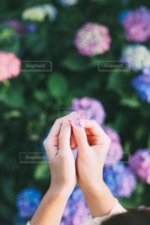 花を持っている手の写真・画像素材[1370511]