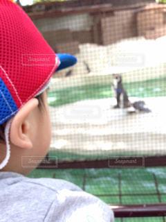 夏,ペンギン,夢中,熱中症