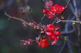 花,冬,梅,日本,和