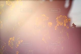 空,花,冬,太陽,光