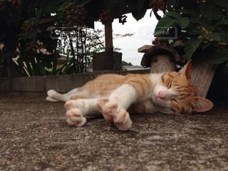猫,動物,寝転ぶ,コンクリート,地面,日陰,気持ちいい,夏バテ
