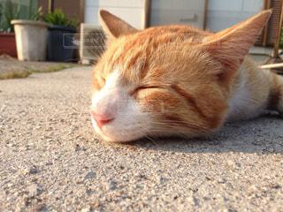猫,動物,夕焼け,夕方,コンクリート,気持ちいい,夏バテ,暑すぎる,現れる,冷たくなって