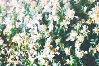 花,花畑,光,草,フィルム,雰囲気,カラー,小花,自然光,フィルム写真,フィルムフォト