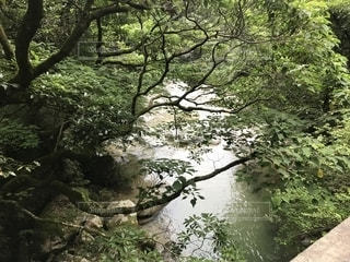 森の大きな木の写真・画像素材[1374900]