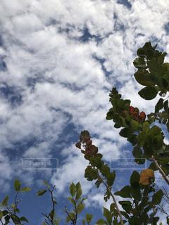 空,雲,草木