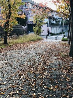 遊歩道の秋色の写真・画像素材[1596145]