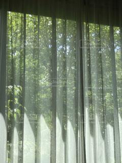 自然のみどりのカーテンの写真・画像素材[2172919]