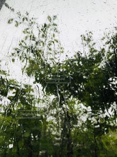 雨,屋外,窓,ガラス,樹木,みどり,雨の日,ひかり,雨の流れ