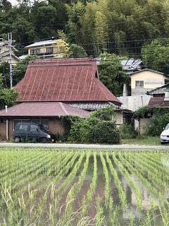 農家の屋根と水田のストライプの写真・画像素材[2187526]