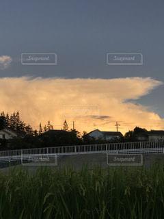 田んぼの稲穂と夕映えの雲の写真・画像素材[2422087]