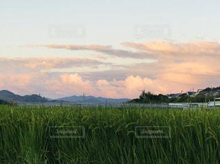 田んぼの稲穂と夕映えの雲の写真・画像素材[2422119]