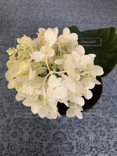 テーブルの上に花瓶の紫陽花の写真・画像素材[1387735]