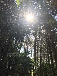 森の中の太陽の写真・画像素材[1879991]