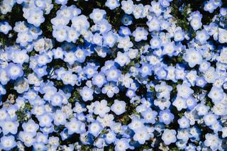 近くの花のアップの写真・画像素材[1385858]