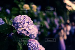 近くの花のアップの写真・画像素材[1385939]