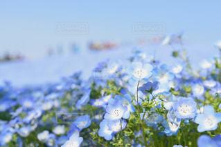 近くの花のアップの写真・画像素材[1385943]