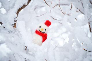 樹氷の中の雪だるまの写真・画像素材[1732281]