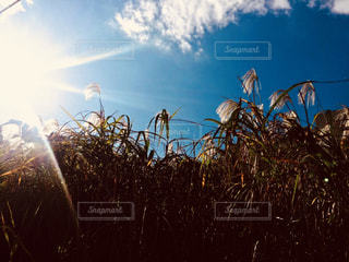 自然,空,秋,屋外,青,景色,草,ススキ,景観