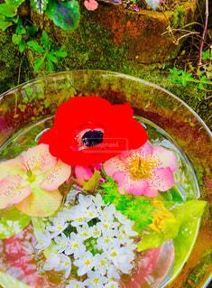 お花の集合写真の写真・画像素材[1380270]
