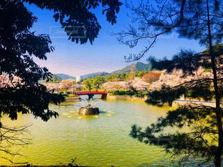 公園,春,桜,橋,庭,湖,ピンク,かわいい,晴れ,晴天,池,デートスポット,噴水,デート,裏山,ぴんく,小春日和
