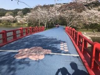 公園,春,桜,橋,庭,湖,かわいい,晴れ,晴天,ウォーキング,池,デートスポット,ピクニック,道,ジョギング,デート,ロード,小春日和,ウォーキングロード